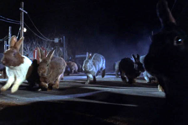 There's a herd of giant killer rabbits coming this way.